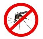 no-mosquito-1